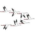 Crane Flight vector image