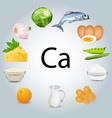 food stuffs rich in calcium vector image vector image