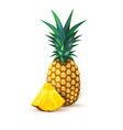 pineapple realistic summer exotic fruit slice vector image