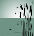Reeds in the water and few dragonflies vector image vector image