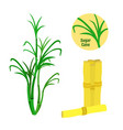 sugar cane set flat style organic food sugarcane vector image