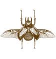 engraving antique rhinoceros beetle vector image