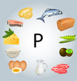 foods rich in phosphorus vector image