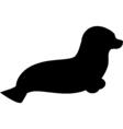 black seadog vector image vector image
