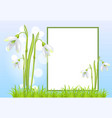 frame for text and snowdrop galanthus bell flowers vector image