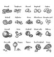 seeds and nuts set vintage hand drawing of vector image vector image