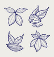 sketch of cocoa beans and leaves vector image vector image