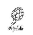 hand drawn artichoke icon vector image