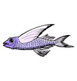 sketch of flying fish vector image