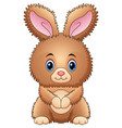 cute baby rabbit cartoon vector image