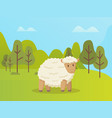 sheep stands on green grass cartoon animal vector image