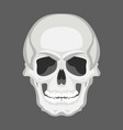 skull human flat style front vector image