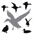 ducks collection vector image vector image