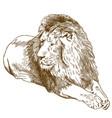 engraving antique lion vector image