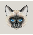 Hand drawn Siamese cat vector image