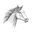 Horse head pencil sketch strokes portrait vector image vector image