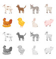 isolated object of breeding and kitchen symbol vector image