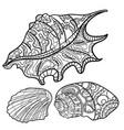 seashells shell pattern shell set coloring book vector image vector image