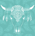 cow skull with feathers isolated on blue vector image