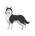 husky dog purebred animal with blue eyes vector image vector image