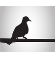 Pigeon sits on a pole silhouettes on the white bac vector image