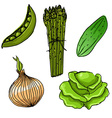 Set of five cute hand drawn vegetables vector image vector image