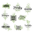 spices and herbs lettering labels vector image vector image