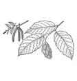 branch of american hophornbeam vintage vector image vector image