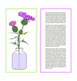 card with thistle flower vector image