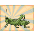 vintage grunge background with grasshopper vector image