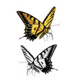 hand drawn sketch butterfly in color isolated vector image