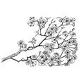 wild flowers with leaves japanese sakura wedding vector image vector image
