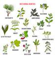 best diuretic herbs set vector image vector image