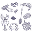 drawing seafoods vector image