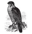duck hawk vintage vector image vector image