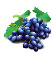 realistic purple grapes bunch with green leaves vector image