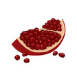 slice of pomegranate with bright red skin and vector image vector image