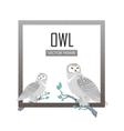 snowy owls flat design vector image