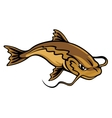 Angry catfish vector image