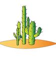 Cactus desert vector image