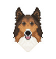 collie dog head in pixel art style vector image vector image