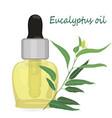 eucalyptus essential oil vector image vector image