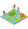 pond scene with two turtles in 3d design vector image vector image