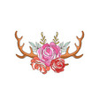 deer horns with rose flowers hand drawn floral vector image vector image