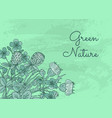 hand drawn medical herbs background vector image vector image
