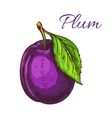 Ripe purple plum fruit with leaf sketch vector image vector image