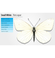 Small white - Pieris rapae vector image vector image