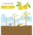 Gardening work farming Pear Graphic template Flat vector image