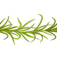 lemongrass plant pattern vector image