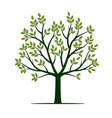 green tree with leafs vector image vector image